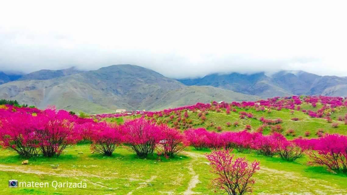 Every tree, every growing thing as it grows, says this truth: You harvest what you sow. With life a short as a half taken breath, don't plant anything but love. ~Rumi❤️  Photo: Gulghundi, Afghanistan.