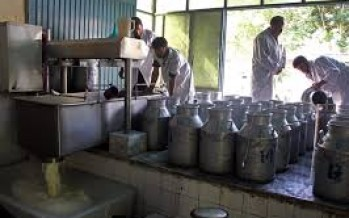 Afghanistan's Dairy Production Declining