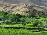 Afghan government to deliver 10,000 tons of seeds to farmers
