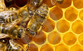 Afghan honey traders in search of market
