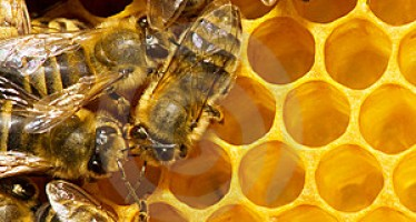 Afghan honey producers urge the government to find international market