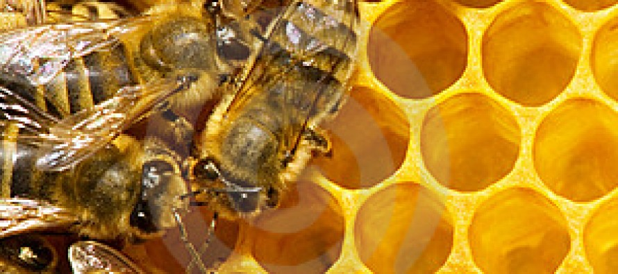 Afghanistan sees a considerable increase in honey production