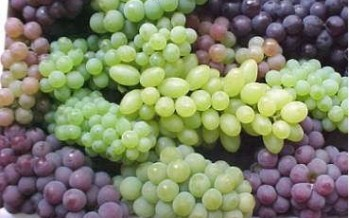 Samangan sees an increase in grapes production