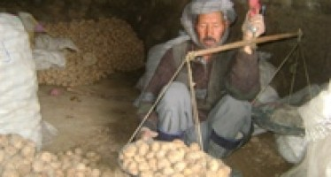 Potato price declining in Bamyan