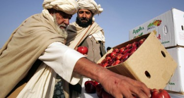 Afghanistan steps up work to strengthen export sector