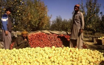 Problems of Baghlan farmers not addressed