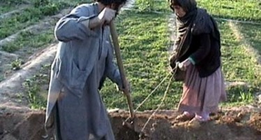 Standardizing agriculture system in Balkh province of Afghanistan
