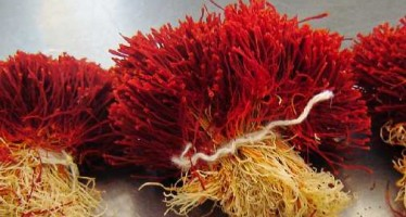 Over 4 tons of Afghan saffron exported to foreign countries
