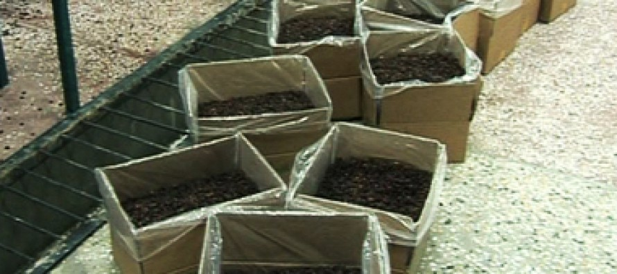 Massive Afghan Raisins Supply Stalled in Hairatan