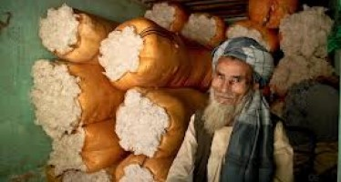 Afghan Agriculture Ministry to standardize cotton production in Baghlan