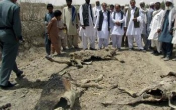 Nearly 20,000 animals hit by drought in Nimroz province