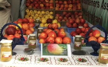 Afghan businesswoman signs agreements with 11 international companies on fruit exports
