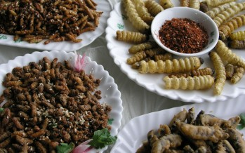 Insect farming addresses food and feed security-UN