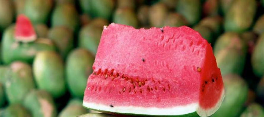 Farah province exports 250,000 tons of watermelons