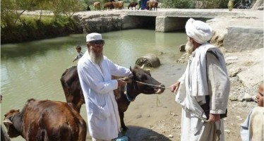 Helmand's Nahr-e Saraj district delivers much-needed vaccines for local livestock