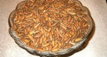 Afghan pine nuts growers in need of better market