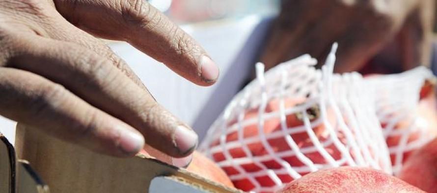 Fruits worth USD 59mn exported from Kandahar