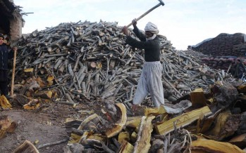Prices of firewood soar with the advent of winter
