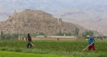 Afghanistan's GDP drops by 4% this year