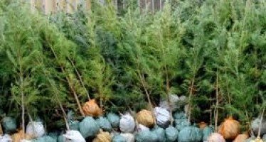 More than 10mn fruit-bearing saplings to be planted in Bamyan province