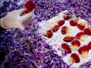 Saffron flower festival held in Herat province