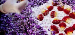 Saffron Processing Factory in Herat to Hire 700 Women