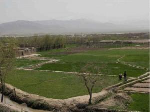 Afghanistan's economy to grow by 2.5%: ADB reports