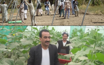 USAID hoop houses in Jowzjan Province increasing off-season vegetable production