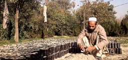 Orchards set up for Afghan men and women to earn income