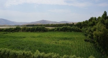 Japan's irrigation scheme transforms Nangarhar's desert
