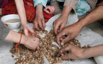 "Severe food insecurity on the rise in Afghanistan – ""extremely alarming trend"""