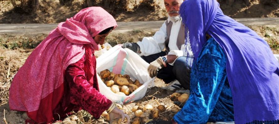 Innovation Grant Fund will increase Afghan farmers' access to agricultural credit