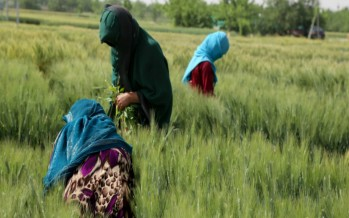 Balkh farmers recognize gender equality for International Women's Day
