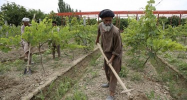 50mn Afghanis worth of garden projects implemented in Takhar