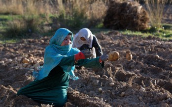 Women's Contributions to Agriculture Economy in Afghanistan Need Recognition