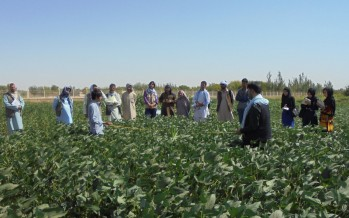 More Afghan farmers turning to soybean to fight malnutrition