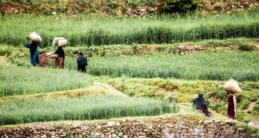 USAID raises women's awareness about agricultural credit in Herat