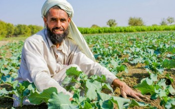 SDGs Workshop on Agriculture and Natural Resources Management Held Across Afghanistan