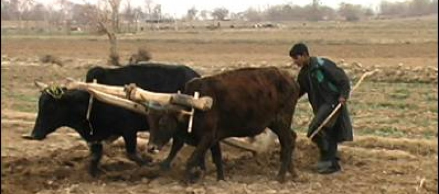 USD 65m grant for promoting Afghan agriculture