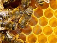 Farah's Honey Production Up By 40%