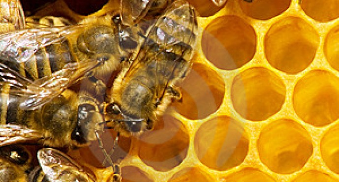 Nangarhar Honey Production to Hit 400 Tons This Year