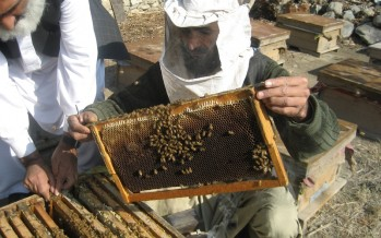 Honey production increasing in Bamyan