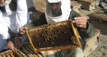 Honey production increasing in Bamyan