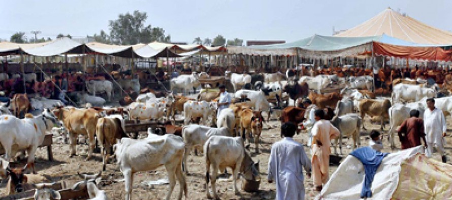 Are all Muslims able to purchase sacrificial animals?