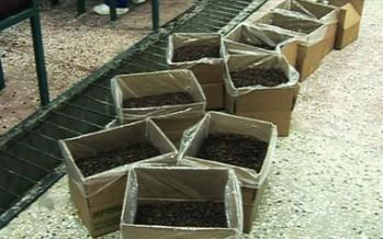 Massive Afghan Raisins Supply Stalled in Hairatan