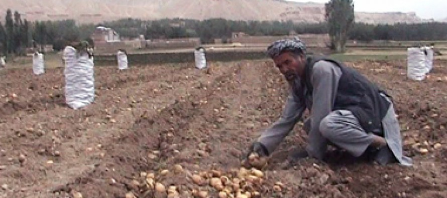 Bamyan potato production meets 60% of Afghanistan's demand