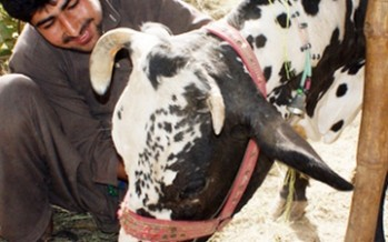 Dairy and milk collection center established in Maidan Wardak