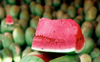 Watermelon production up by 5% in Farah province