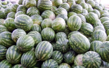 Watermelon production in Farah Province has doubled compared to last year
