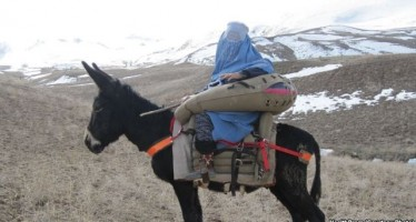 'Donkey Ambulances' developed to carry Afghan women in labor
